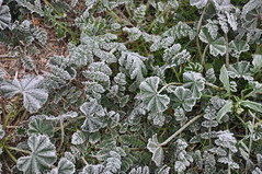 Frost in north Phoenix, AZ (N-Sai) Tags: winter holidays newyear coldweather winterweather january2011