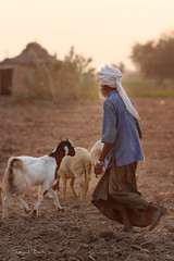 Shepherd and Flock of Sheep ( DocBudie) Tags: people india sheep shepherd human sindh rajasthan northindia flockofsheep chandan incredibleindia photographictour travelasiaphotographycom rajasthanishepherd rajasthaniroadtripbikanertojaisalmer