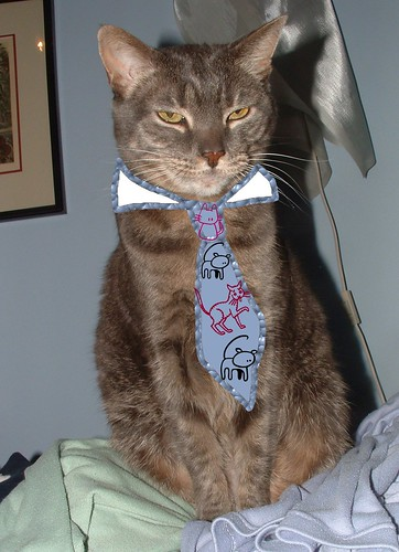 cat wearing ugly tie