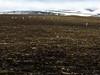 Svalbard Reindeer (danielfoster437) Tags: abenteuer arktis bergwandern eis kälte wintereis adventure arctic arcticreindeer avontuur coldweather dewinter ice koude landscape mountain nature noordpool outdoors reindeer sne spitsbergen svalbard svalbardreindeer terrain wilderness winter wintercold winterijs 土地 山 寒い 背景に動物 広い