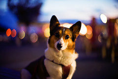 at the crack of dawn (moaan) Tags: leica travel light dog travelling digital 50mm dawn corgi dof motorway bokeh f10 utata noctilux turnpike expressway welshcorgi taillight daybreak 2010 m9  servicearea pochiko leicanoctilux50mmf10 sa leicam9 atbreakofdawn beforeitislight gettyimagesjapanq1 gettyimagesjapanq2