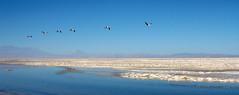 San Pedro de Atacama (Ricardo Luengo) Tags: chile san pedro atacama ricardo desierto luengo mywinners ricardoluengo