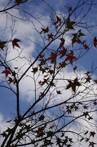 2010-12-01 滿月圓森林公園