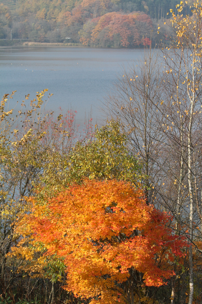 Lake Konuma with autumn color