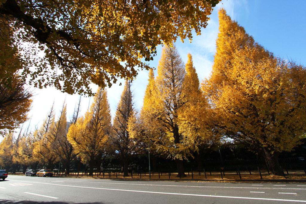 Meijijingu Gaien Icho Matsuri 2010 (8)