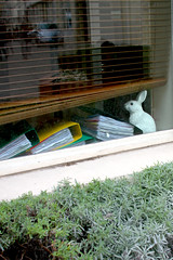 Paris, Un lapin blanc... (Calinore) Tags: street city windows pet paris france bunny animal rue arrondissement bastille ville lapin fenetre xieme passageduchevalblanc