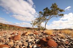 Finke River bed 1 (Tindo2) Tags: tree river desert dry australia redrocks outback finke dryriverbed riverredgum