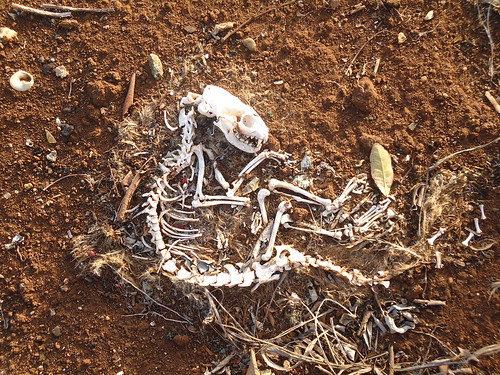 Help ID Skeletal Remains (no rush) [Archive] - Straight Dope ...