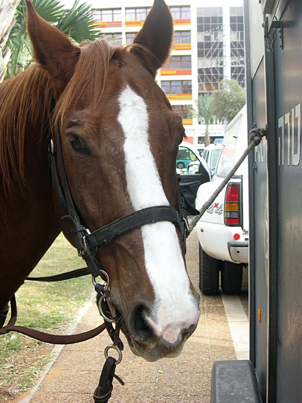 10-12-2010-horse