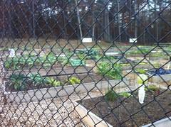 Smyrna Community Garden