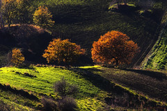 The Little, the Young, the Grown Up (Sicily, Sicilia) (Angelo Bosco) Tags: autumn trees tree verde green alberi rural countryside sicily tamron albero autunno sicilia rurale 18270 colourednotes tamron18270 angelobosco mygearandmepremium mygearandmebronze