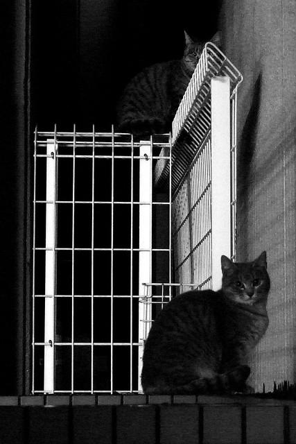 Today's Cat@2010-12-13