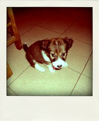(dieguixxpincharrata) Tags: dog chien pet co cane polaroid hond can perro hund pies aso kutya pas  kare gos hundur suns  pini  hundo kpek inja  koira   koer txakur   ch uo cine  avu  haushund kelb  c kpk kik     piesdomowy   ku   allqu tamhund   domaipas      pesdomc   haushond domaipes   kng  hndj