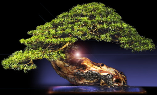 """Bonsai 063 • <a style=""""font-size:0.8em;"""" href=""""http://www.flickr.com/photos/30735181@N00/5261939654/"""" target=""""_blank"""">View on Flickr</a>"""