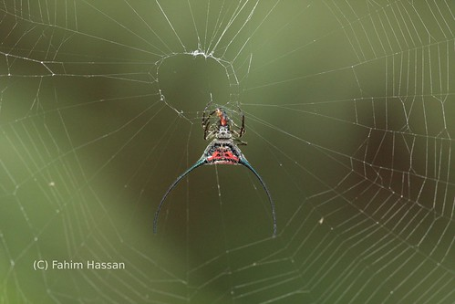 spider_Lawachora NP