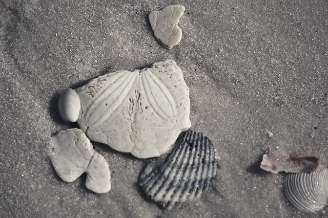 "...""all the tiny chips of broken seashells, worn to polished flakes by ages of relentless tides..."""