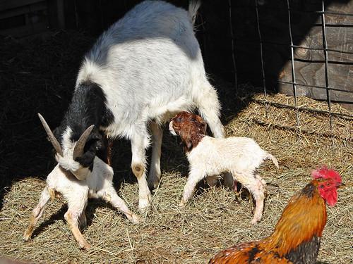 First babies