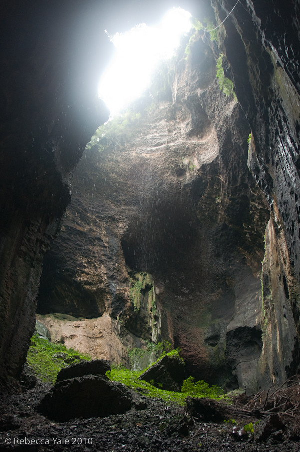 RYALE_Gomantong_Cave_8-2