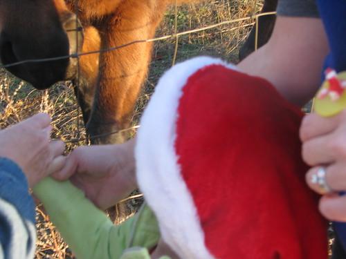 Christmas 2010 029