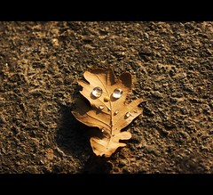 memories... (Frank Wuestefeld) Tags: life street autumn naturaleza sun eye fall nature water face germany ojo living leaf drops eyes gesicht wasser dof natural availablelight herbst natur ojos creativecommons augen asphalt avenue cinematic blatt sonne auge baum wandern harz orton allee spaziergang natrlich teer eichsfeld strase seeburgersee justnatureseries frankwuestefeld germanyseries