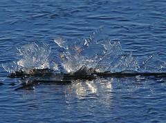 cristaux de glace sur l'etang - water cristal on pond (dombes et ailleurs) Tags: water pond eau frost cristal etang dombes