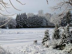 sneeuwlandschap, Leuven (Kristel Van Loock) Tags: snow leuven landscape drieduizend sneeuw neve neige paysage paesaggio landschap winterlandscape sneeuwlandschap winterlandschap paysagedeneige paesaggiodineve