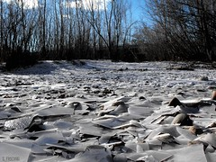 (S. Fielding) Tags: blue trees winter sky cold tree ice nature rock river frozen rocks day afternoon branches hard sheets idaho boise finepix fujifilm plates crunchy s1000fd