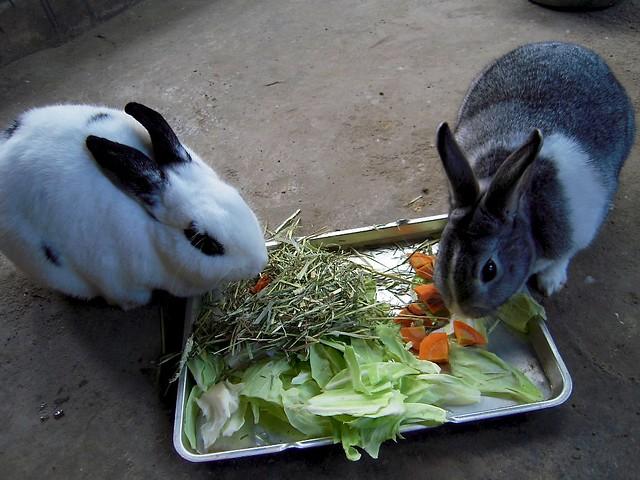 231208 飼育係。ウサギが2兎。