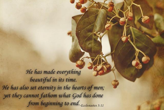 Scripture&Snapshot