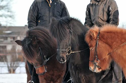 unsere drei Pferde