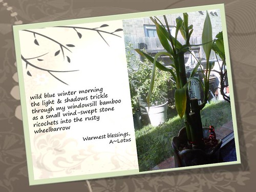 Bamboo Morning (Haiga)