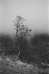 (Blackeyedog) Tags: trees winter blackandwhite bw mountain black tree fog alberi clouds analog forest 35mm woodland landscape woods nuvole pentax nowhere hc110 400 m42 spotmatic 135 nebbia albero inverno legacy montagna bianco freddo 147 paesaggio umbria biancoenero analogica bosco 135mm macchia pellicola umbra kodakhc110 blackwhitephotos autaut film:iso=400 hardwaresp legacypro developer:brand=kodak developer:name=kodakhc110 film:brand=freestylearista freestylearistalegacypro film:name=freestylearistalegacypro400 filmdev:recipe=6308