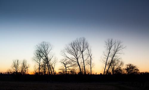 Copse sunset