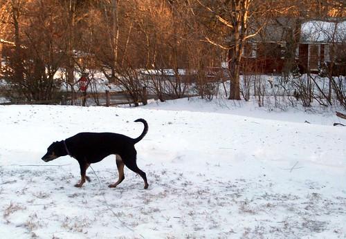 Lola_snow_122810c