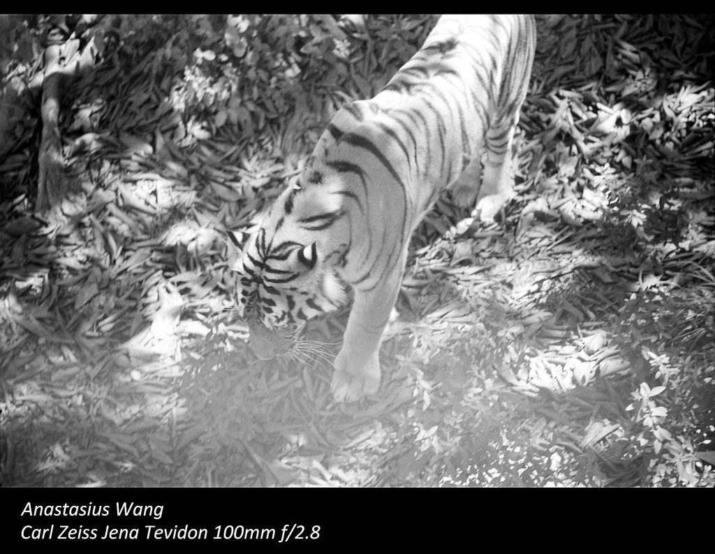 SZ Zoo 09