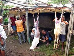 Potong kambing (Mangiwau) Tags: festival indonesia java blood eid goat goats jakarta gore torture cutting lamb lambs papua throat kambing bogor slaughterhouse sacrifice slaughtering adha sacrificial potong idul papuan dipotong