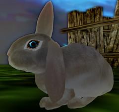 Fiiiiiiinally! (Marina Storaro) Tags: bunnies secondlife sparrow ozimals