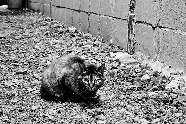 Today's Cat@2011-01-15