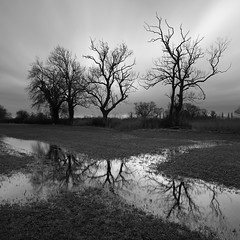 Compton Bishop Trees (Adam Clutterbuck) Tags: uk greatbritain trees winter england blackandwhite bw monochrome grass reflections square mono blackwhite unitedkingdom britain somerset bn elements gb land fields bandw sq grazing flooded greengage adamclutterbuck sqbw bwsq showinrecentset comptonbishop