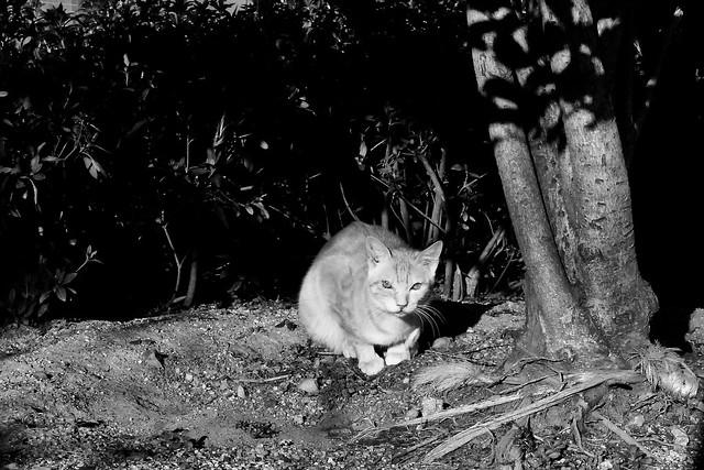Today's Cat@2011-01-16