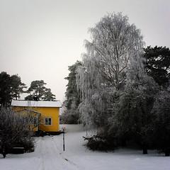 My previous home (Dirigentens) Tags: trees house snow tree yellow garden gteborg frost minolta sweden snowy gothenburg birch bjrk 1001nights sn hus trd f200 trdgrd gult bsquare nset bej 200c platinumheartaward 100commentgroup tripleniceshot 1001nightsmagiccity mygearandmepremium mygearandmebronze mygearandmesilver gettyimagesswedenq1 ginordic1 4timesasnice 5timesasnice