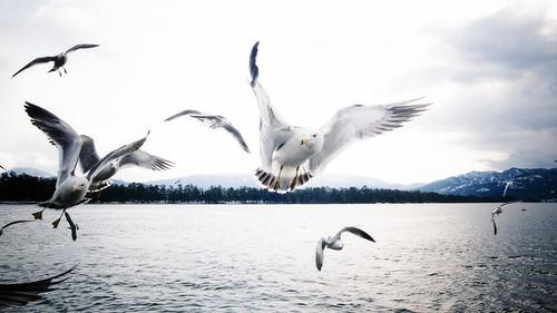 14545 - seagull #1