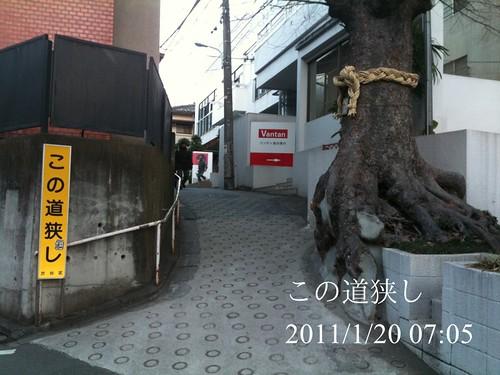 早朝ウォーキング(2011/1/20):この道狭し