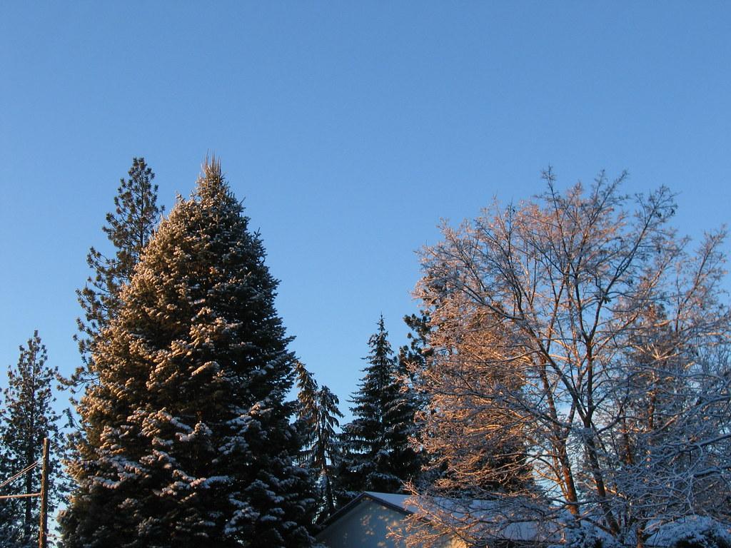 Trees capture the sunrise