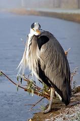 Canal Heron Lookin At You