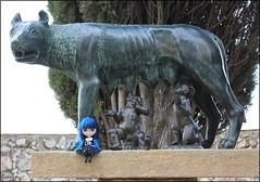 Cat en Tarragona