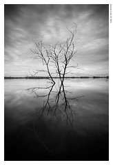 Dullish III (Jason_Loo) Tags: lake reflection blackwhite lonetree      lakesurface