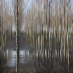 ghosts on the river banks (rita vita finzi) Tags: trees winter nature lines reflections pastel abstraction delicate floodplain