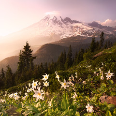 The Mountain (posthumus_cake (www.pinnaclephotography.net)) Tags: park flowers trees sunset summer vacation sky usa mountain snow mountains flower color green nature beautiful beauty america forest canon square landscape evening washington nationalpark colorful paradise lily northwest dusk hiking availablelight vibrant gorgeous wide peak naturallight wideangle august glacier ridge trail alpine filter crop rainier mountrainiernationalpark cascades pacificnorthwest handheld 5d wildflowers wilderness polarizer mtrainier canonef1740mmf4lusm squarecrop 1740 pinnacle circularpolarizer cascademountains cascaderange 1740l cascademountainrange gnd canoneos5d pinnaclesaddle pinnaclepeaktrail avalanchelily graduatedneutraldensity plummerpeak gnd06 pinnaclesaddletrail