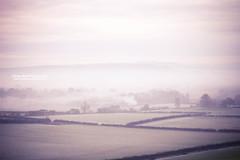 My Hidden Valley - Day 112/365 (explore) (Olivia L'Estrange-Bell) Tags: pink autumn winter mist fog woods frost dorset 365 englishcountryside foggymorning canonef85mmf18 earlymorningfog 365days winterfrost 365project winterfog canoneos5dmarkii oliviabell oliviabellphotography englishcountrysideinthemorning tbsart